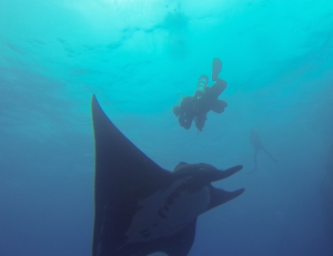 Stare down with a Giant Manta Ray......PRICELESS!